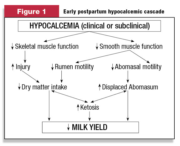hypocalcemia in cattles Ovines and caprines bolus and nutritional treatments for ovines and caprines.