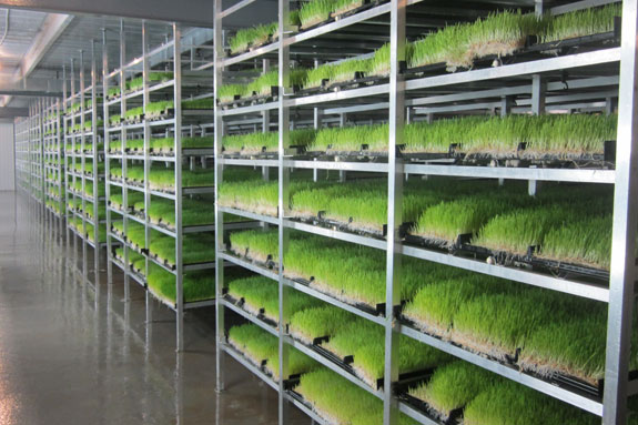 Two Dairymen Are Making Profits With Sprout Fodder Systems