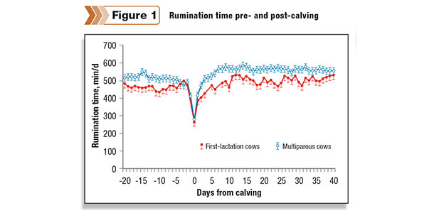 cows with reduced rumination before calving maintained reduced rumination time after calving and suffered a greater frequency of disease than cows with greater rumination time in late pregnancy
