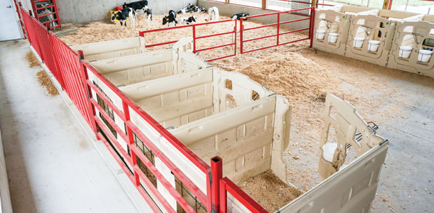 Calf housing: Automatic group feeders vs. individual pens ...