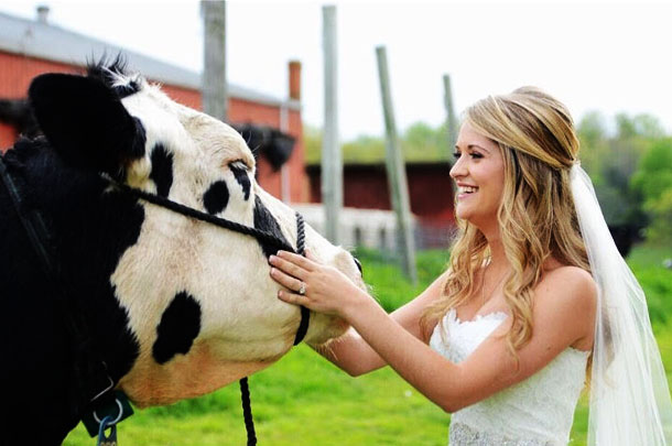 Bride and favorite cow