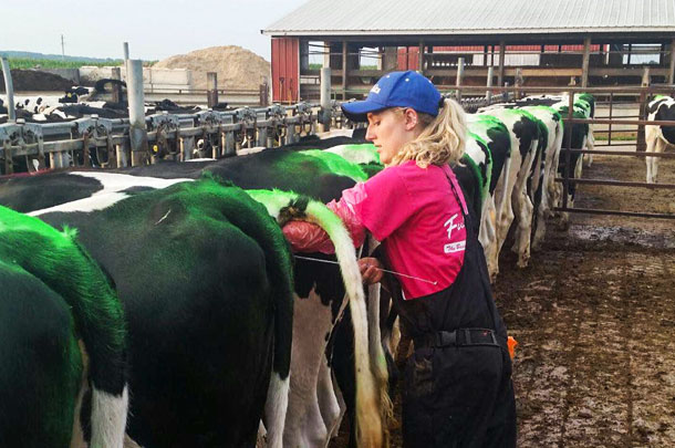 Getting Cows Bred How 3 Dairies Get It Done Progressive