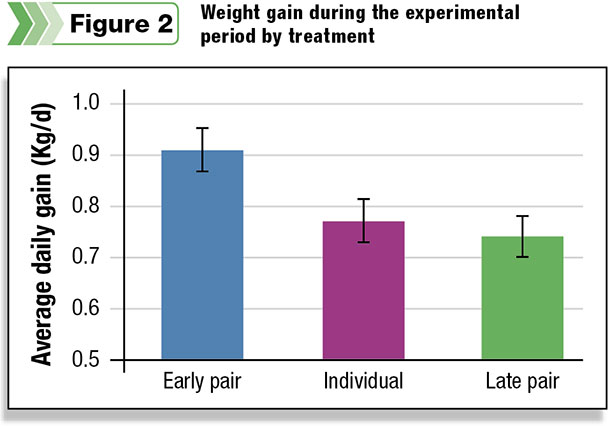 Weight gain during the experimental period