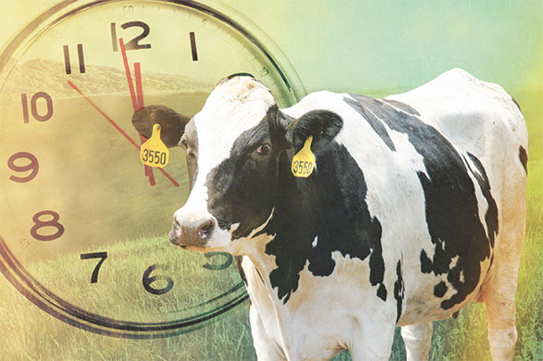 www.progressivedairy.com/images/stories/2016/01/27/012716-cow-and-clock-scully.jpg
