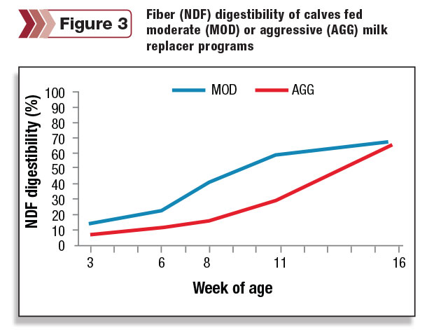 Fiber digestibility of calves fed moderate or aggressive milk replacer