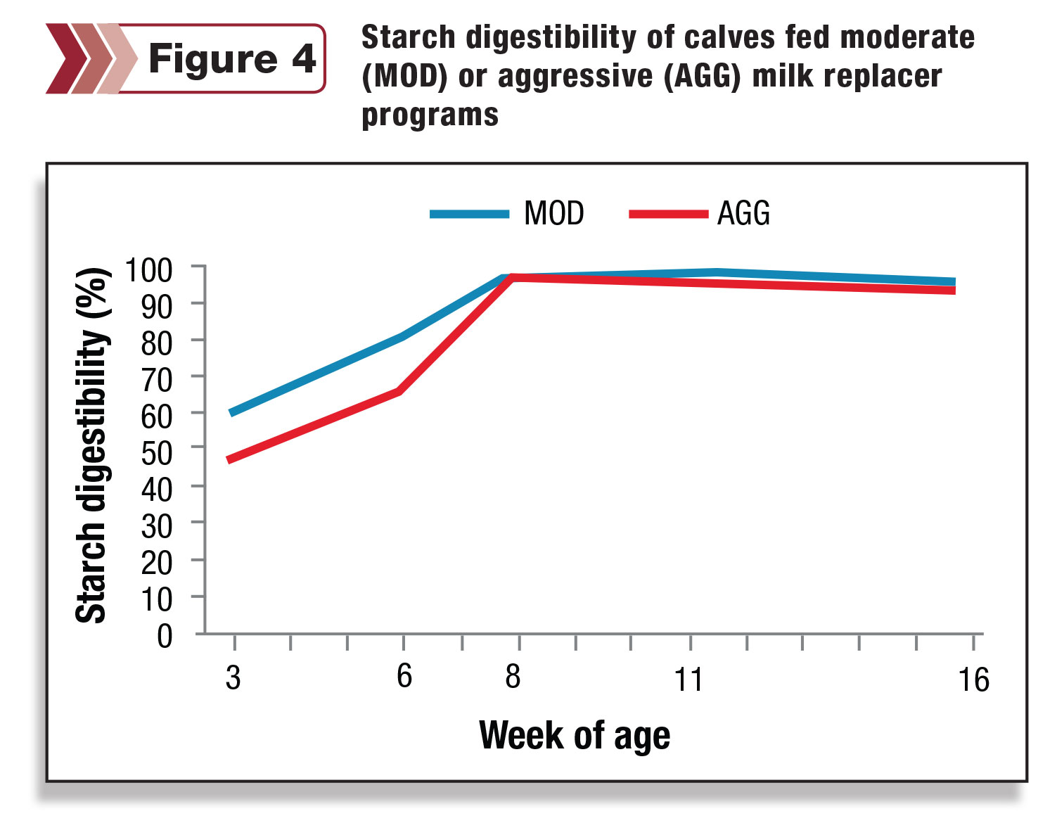 Starch digestibility of calves fed moderate or aggressive milk replacer