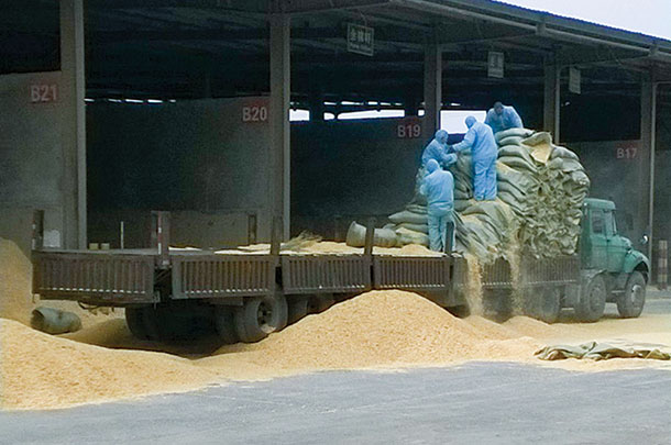 Bulk feed often arrives at Chinese dairies in bags