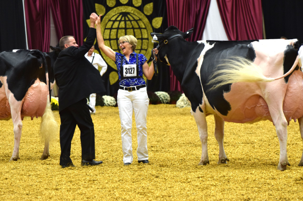 Sheeknoll Durham Arrow wins reserve supreme champion