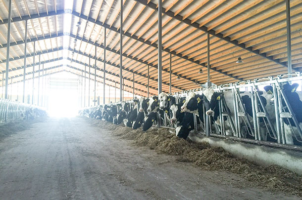 Heifers need light