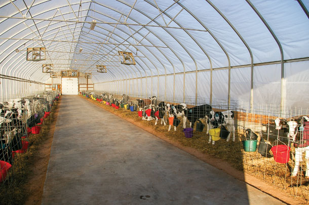 Structures keep the calves comfortable in winter