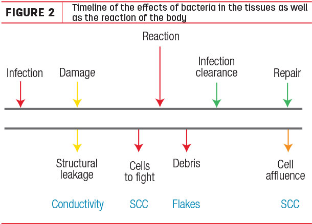 Timeline of the effects of bacteria in the tiddues as well as the reaction of the body