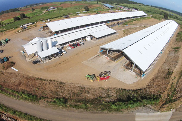 Big Island Dairy is home to 1,200 cows in Hawaii