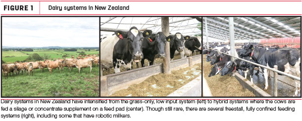 Dairy systeme in new Zealand