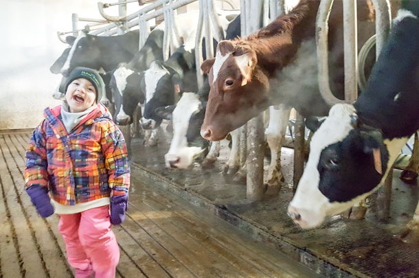 Kayla Rademacher and dairy cows