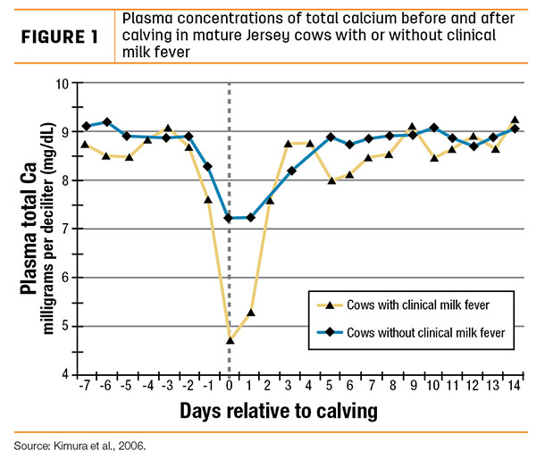 Managing Hypocalcemia In Dairy Cows