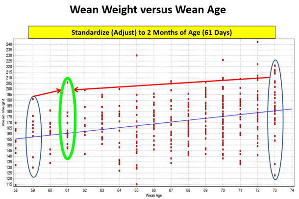 Figure 1 wean weight