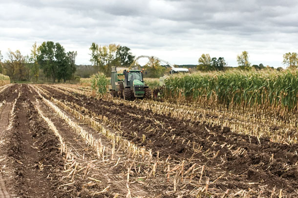 muddy harvest conditions can lead to higher ash content