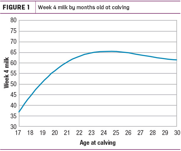 Week 4 milk by months old at calving
