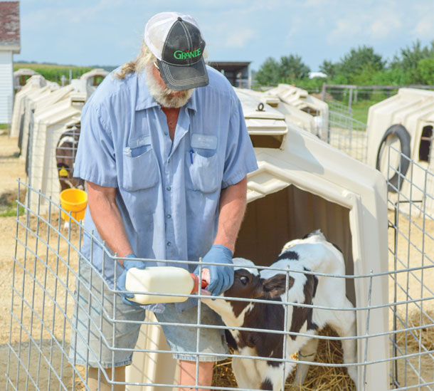 Tom McClellan feeding a calf