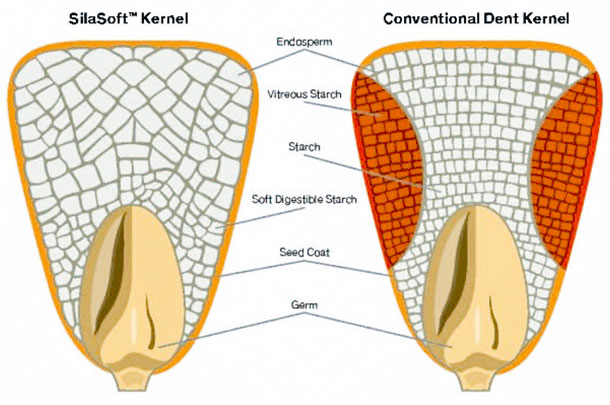 SilaSoft kernel technology