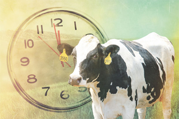 Timing of insemination