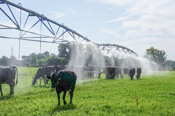 cow cooling with pivot irrigation