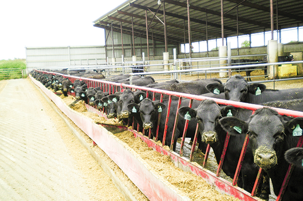 Selecting high-quality beef semen for use on Holstein females