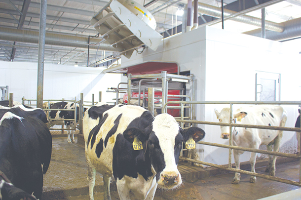 There are three robots in each 180-cow pen
