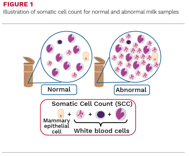 Illustration of somatic cell count for normal and abnormal milk samples