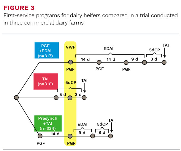 First-service programs for dairy heifers compared in a trial