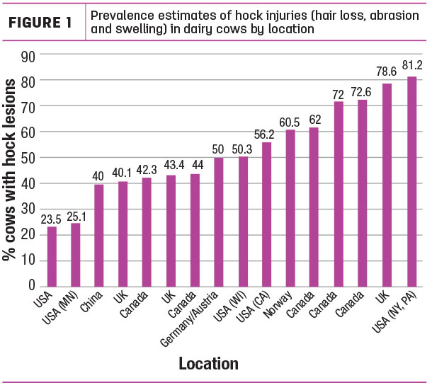 Prevalence estimates of hock injuries