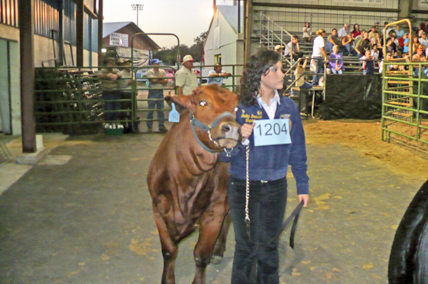 Shelby Dressel showing cow