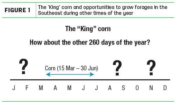 The 'King' corn and opportunities to grow forages
