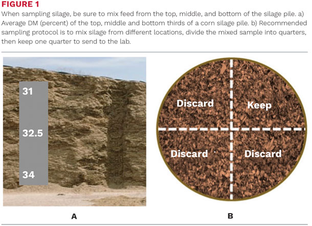 When sampling silage, be sure to mix feed from the top, middle and bottom of the silage pile
