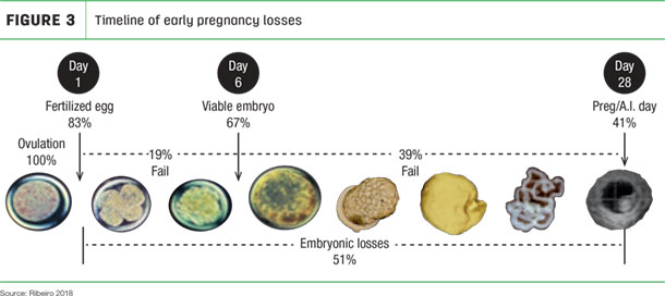 Timeline of early pregnancy losses