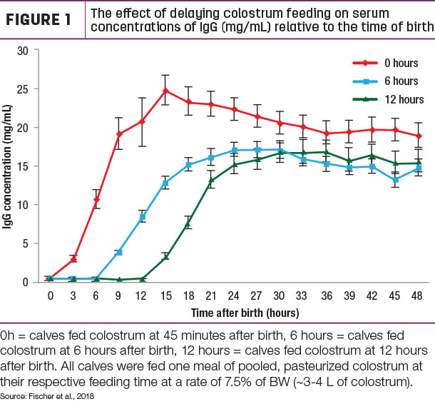 The effect of delaying colostrum feeding on serum concentrations of lgG