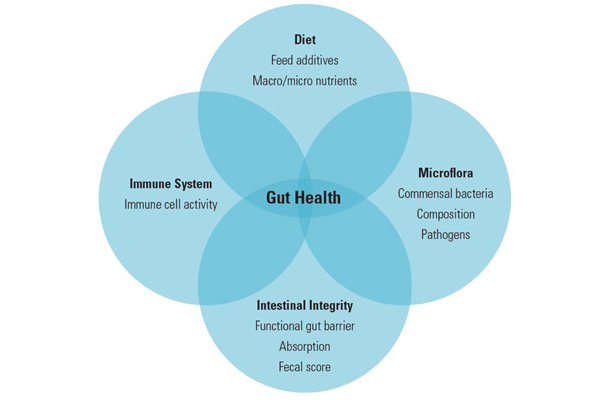 gut health components