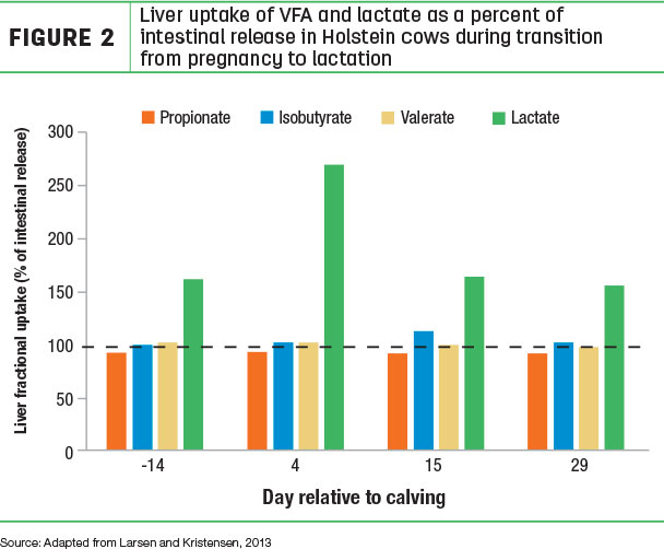 Liver uptake of VFA and lactate as a percent of intestinal release