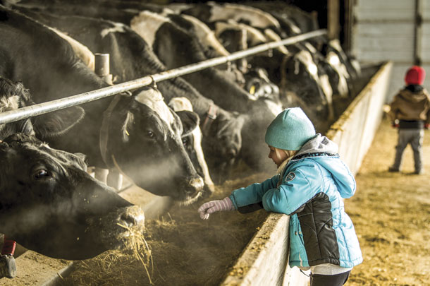 Farm firl talks to her family's Holsteins