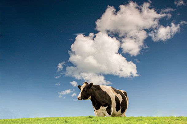 cow and cloud