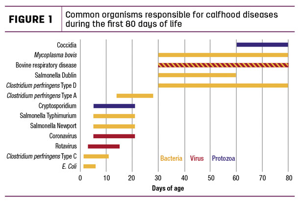 Common organisms responsible for calfhood diseases during the first 80 days of life